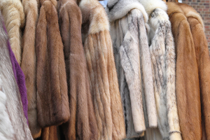 Fur Cleaning in Mahwah, NJ | Fur Storage and Cleaning